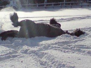 "Harvey says ""hello snow"""