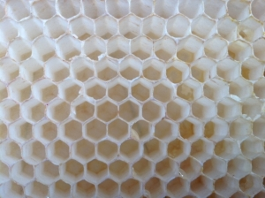 honeycomb made by LCF bees