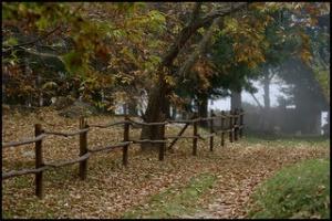 mists oryctes