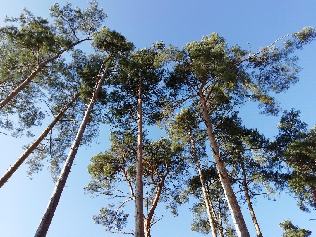 treetops frensham