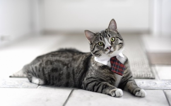 businesscat-1024x640